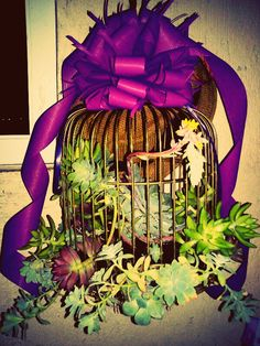 Sedums at birdcage / combination of succulent / this gift makes happy  the collector /decorate with battens