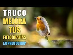 Long-term Photoshop Tutorial Step By Step Photoshop Lessons, Photoshop Fail, Photoshop Brushes, Photoshop For Photographers, Photoshop Photography, Photoshop Tutorials Youtube, Natural Brushes, Photo Editing, Macabre