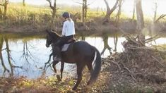THIS IS JUST WAY TO CUTE!! This Horse Is Terrified Of Water, But Watch This! What Happens At 1:08 Is HILARIOUS!