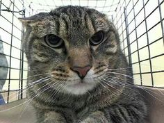 Please save sweet frightened Jerry from death at the ACC shelter in New York City URGENT visit pets on death row on Facebook. He is neutered and needs out or he will be killed.No more gone but not forgotten at this shelter Please.