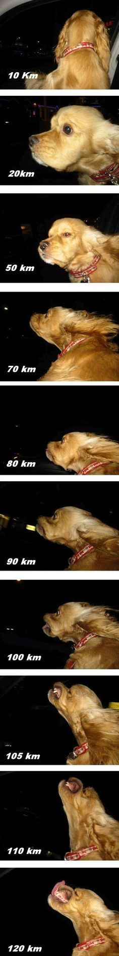 Dog vs. speed.  And then you crash at 130km/h since you are too busy taking those pictures.