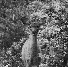 鹿,不知道怎麼的、想起了蜷川實花。