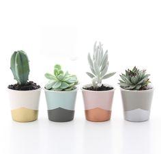 Nordic Petite Plante