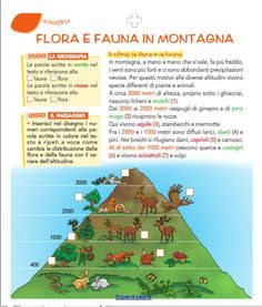 flora e fauna Geography For Kids, Reading Practice, Flora, Preschool, Education, Third, Anna, Baby, School