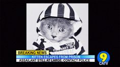 Cute Kitten Convict Escapes From Prison. Video from Cat CATastrophes. A Prayer Before Dawn, King Of The World, Dysfunctional Family, Tough Guy, Cat Gif, His Eyes, Kittens Cutest, Twitter, Prison