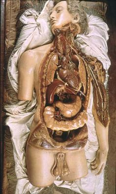 La Specola Model, C wax// florence, italy one of mine and olivia's favorite museums Anatomy Study, Anatomy Art, Human Anatomy, Vanitas, Danse Macabre, Medical History, Anatomy And Physiology, Memento Mori, Human Body