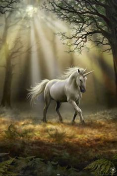 Adorn your empty wall with the reprint poster of Glimpse of Unicorn by Anne Stokes and brings a vibrant outlook with this amazing masterpiece. It is a poster that gives a whole new definition of beaut