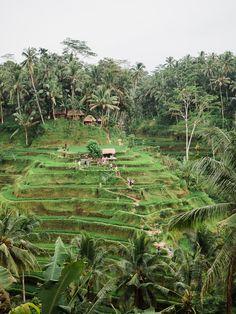 Visiting Ubud's Tegalalang Rice Terraces | Bali Itinerary & Travel Guide