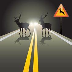 Zwierzęta na drodze – jak uniknąć kolizji? https://www.autodna.pl/blog/zwierzeta-na-drodze-jak-uniknac-kolizji/