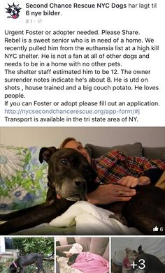 1/5/17 REBEL IS A WONDERFUL SENIOR NYC ACC SURVIVOR IN NEED OF URGENT FOSTER/ADOPTER!! COULD YOU PLEASE CONSIDER OPENING YOUR HOME AND HEART TO THIS PRECIOUS SURVIVOR? /ij https://m.facebook.com/story.php?story_fbid=1122547817854272&id=268612969914432&__tn__=%2As