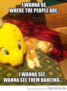 : It is sad how hard I laughed at this. Why do we abuse cats so much? Oh yeah...