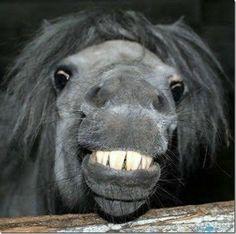 Animal smile! Cute #luxesmile