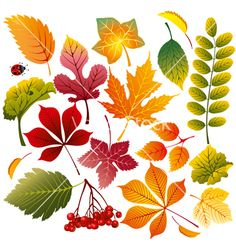 Autumn leaves vector image on VectorStock Leaves Vector, Autumn Painting, Fall Wallpaper, Autumn Activities, Leaf Art, Flowering Trees, Free Vector Art, Vector Vector, Vector Graphics