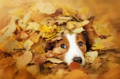 As the leaves begin to drop, it's a sign to pet parents that we need to get our dogs ready for fall.