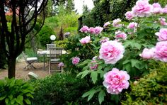 Geplantes Chaos: Wilder Garten im goldenen Schnitt Diy And Crafts, Plants, Golden Ratio, Full Stop, Plant, Planets