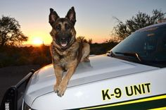 "Pima County sheriff's K-9 dies after freak accident. The deputy and his dog were described by Bañuelos as ""one of the most productive narcotics teams in the history of the Pima County Sheriff's Department Canine Unit. Since February 2011, Ahern and Kilo conducted 263 narcotics searches. The combined total of Kilo's seizures was 4,723 pounds of marijuana, 43 pounds of cocaine, 4 pounds of methamphetamine, a half-pound of heroin, and more than $1 million in U.S. currency."