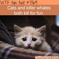 Cats kill for fun - WTF fun facts