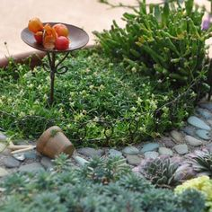 Miniature Fairy Garden Wire Edging *** To view further for this item, visit the image link. Fairy Garden Houses, Gnome Garden, Lawn And Garden, Garden Fun, Garden Supplies, Garden Tools, Garden Ideas, Winter Greenhouse, Garden Edging