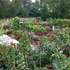 Understanding & Growing Heirloom Fruits and Vegetables: Organic Gardening
