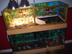 Browse all of the Above Tank Basking Area photos, GIFs and videos. Find just what you're looking for on Photobucket Aquatic Turtle Habitat, Aquatic Turtle Tank, Turtle Aquarium, Aquatic Turtles, Turtle Basking Area, Turtle Basking Platform, Turtle Pond, Turtle Care, Pet Turtle