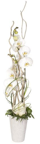 Phalaenopsis Orchids and roses in white for winter and colour of choice for spring.