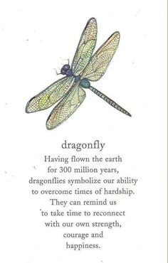 And this is why a dragonfly tattoo soars upon my hip