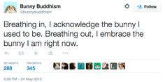 Image result for bunny buddhism