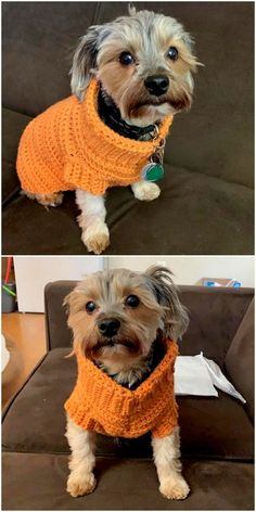 Best Crochet Free Patterns To Use Appealing Crochet Yarns - Diy Rustics Source by ideas diy Loom Crochet, Finger Crochet, Crochet Crafts, Crochet Projects, Free Crochet, Crochet Pet, Diy Crafts, Crochet Dog Sweater Free Pattern, Dog Pattern