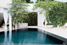 A potted olive tree, a wall of orchids, and climbing bindweed accent the terrace's pool area.