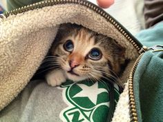 The kitten face to rule them all. | The 40 Most Adorable Baby Animal Photographs Of 2013