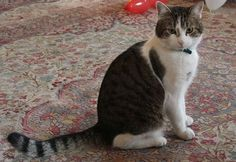 Larry the Cat lives at 10 Downing Street with the Prime Minister.