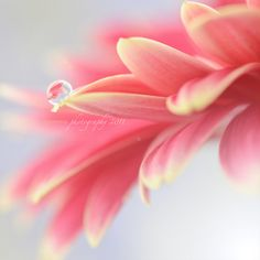 sweet little drop. CANNOT wait for my Spring to get here! Bokeh Photography, Street Photography, Levitation Photography, Exposure Photography, Pretty In Pink, Beautiful Flowers, Dew Drops, Rain Drops, Effects Photoshop