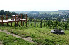 Kilátás a Szőlőhegyről / View from the vineyard