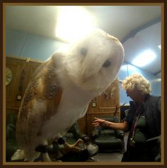 Staff Review of an Owl Encounter at Eagle Heights! #blogpost #experiencedays #owlencounter #birdsofprey #kent