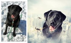 Artist Continues to Photoshop Rescue Dogs to Help Find Them Homes - My Modern Met