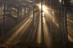 Forest Photography: tips for capturing the enchanting essence of your local woodland