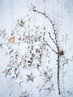 Birch Scatter Stars