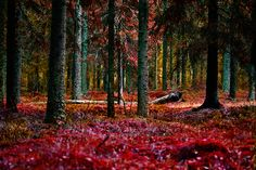Autumn in the forest by Marek Czaja on 500px