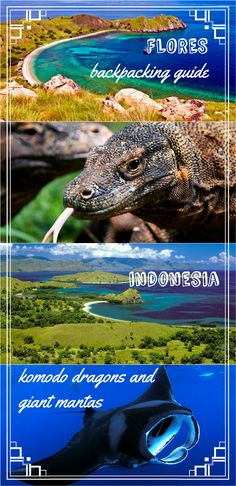 Complete guide to Flores island, Indonesia, plus day trip to Komodo/Rinca islands. Budget accommodation, transport, scooter rental, places to eat and all prices. #komodo #flores #backpackingindonesia
