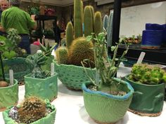 pots for cactus and succulents - Google Search