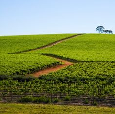 VINEYARD CAUGHT OVER FALSE ORGANIC CLAIMS #wine #winery #wineeducation #organic