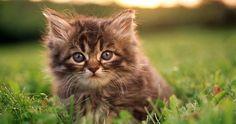 #Cats  #Cat  #Kittens  #Kitten  #Kitty  #Pets  #Pet  #Meow  #Moe  #CuteCats  #CuteCat #CuteKittens #CuteKitten #MeowMoe      ...   http://www.meowmoe.com/10586/