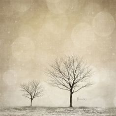 winter trees, photo by Laura Ruth