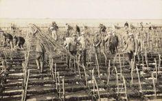 Aanleg van de Afsluitdijk rond 1930. Foto door W. Verkerk
