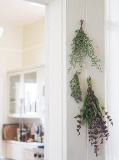 How to Dry Herbs  	  - This is the time of year I find myself drying herbs. In…