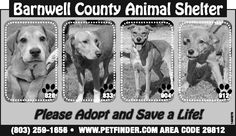 Barnwell County Animal Shelter ad for September 18, 2013. | Barnwell, SC | Pet Adoption | The People-Sentinel