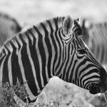 Photos of Etosha National Park (20 Photos)