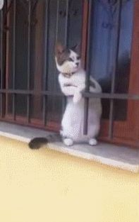 Other Funny Gifs http://gif-tv.tumblr.com/ And Funny Youtube Video - https://www.youtube.com/watch?v=qQKw5m0I_qc