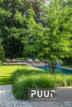 Backyard Pool Designs, Modern Backyard, Swimming Pools Backyard, Side Garden, Garden Pool, Water Garden, Modern Garden Design, Landscape Design, Outdoor Planters