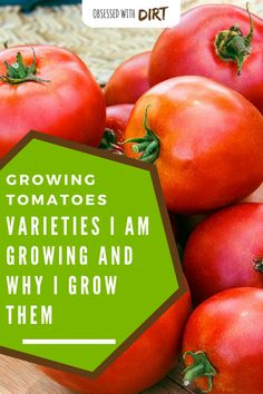 Ineffable Secrets to Growing Tomatoes in Containers Ideas. Remarkable Secrets to Growing Tomatoes in Containers Ideas. Vegetable Garden For Beginners, Backyard Vegetable Gardens, Tomato Garden, Gardening For Beginners, Tomato Plants, Gardening Tips, Garden Seeds, Planting Seeds, Growing Tomatoes In Containers